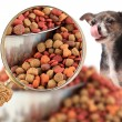 Magnigying in on dog nutrition — Stock Photo #62629273