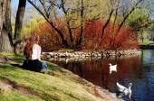 Girl at duck pond — Stock Photo