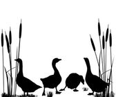 Goose and ducks silhouettes — Stock Vector