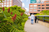 The High Line Park — Stock Photo