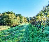 Tuscany Campaign — Stockfoto