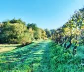 Tuscany Campaign — Stock Photo