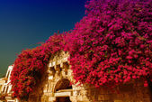 Flowers surrounding ancient arch — Stock Photo