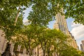 Trees of fifth avenue in New York — Stock Photo