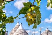 Grape on a beautiful summer day — Stock Photo