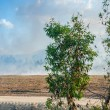 Fires in the Queensland countryside - Australia — Stock Photo #55546477