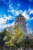 Galata Tower framed by trees — Stock Photo