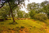 Vegetation of Central Park in Manhattan — Stock Photo