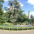 NEW YORK CITY - JUNE 13, 2013: People walk in Central Park. The — Stock Photo #73358175