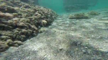 Diving underwater in low water. — Stock Video