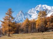 The forest and the snowy peaks of Mont Blanc in fall — Stock Photo