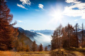Mountain landscape in autumn: larch trees, shining sun, foggy va — Stock Photo