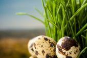 Green grass macro natural background — Foto de Stock