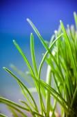 Zelené trávě makro přirozeného pozadí — Stock fotografie