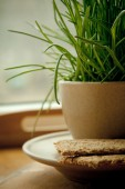 Tray with crispbreads and cup of grass — Stock Photo