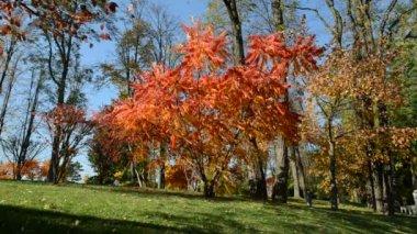 NOVI PETRIVTSI, UKRAINE - OCTOBER 14: The trees in autumn colors in Mezhigirya on October 14, 2014 in Novi Petrivtsi, Ukraine. It is former residence of ex-president Yanukovich, now open to the public — Stock Video
