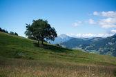 Mountain landscape in Alps — Stock Photo