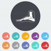 Foot anatomy icon. — Stock Vector
