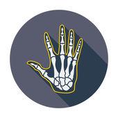 Anatomy hand — Stock Vector