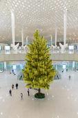 Firtree in ShenZhen airport — Photo