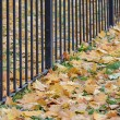 Autumn diagonal — Stock Photo #55478873