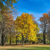 park with autumn chestnuts — ストック写真