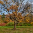 Autumn oak tree — Stock Photo #56264107
