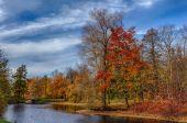 Zonnige herfst park — Stockfoto