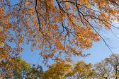 Herfst takken — Stockfoto