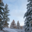 Trees after snowfall — Stock Photo #56290223
