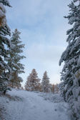 Trees after snowfall — Stockfoto