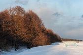 Winter sea shore — Foto de Stock