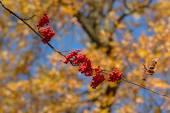 Kırmızı kırpma — Stok fotoğraf