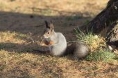 Squirrel  under the tree — Stock Photo