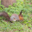 Squirrel on spring grass — Stock Photo #59951191