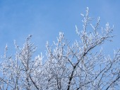 Winter branches — Stockfoto