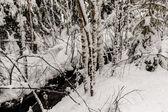 Snöiga landskap — Stockfoto