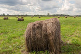 Hay on meadow — Stock Photo