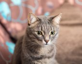 Cat closeup — Fotografia Stock
