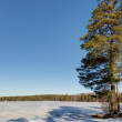 Forest lake with snow — Stock Photo #71292711