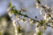 White spring — Stock Photo