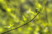 Green spring — Stock fotografie