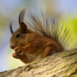 Squirrel on a tree — Stock Photo #76420169