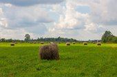 Hay gathered in the meadow — Stock Photo