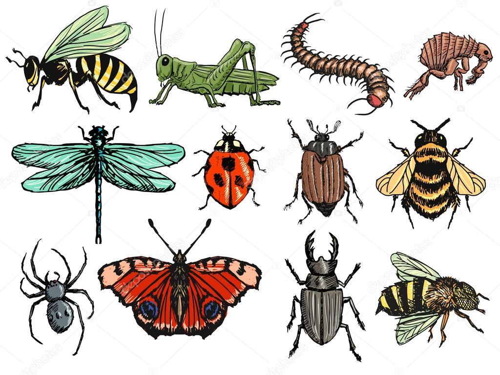 Картинки по запросу насекомые