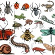 Set of insects — Stock Vector #61052249