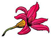 Flor de lírio — Vetorial Stock