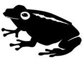 Frog — Stock Vector