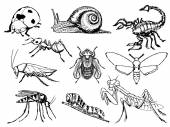 Set of insects — Stock Vector