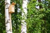 Nesting box in a tree in the park — Stock Photo